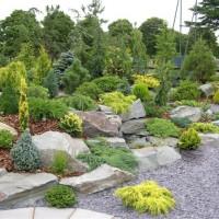 Вечнозелёные растения и миниатюрные кустарники в альпинариях